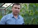 ОГУРЦЫ 3 способа вертикального выращивания плети в теплице