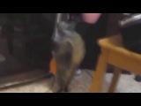 Сборник приколов с кошками 2014, кот отжигает, смешная кошка, подборка приколов с животными, ghbrjks