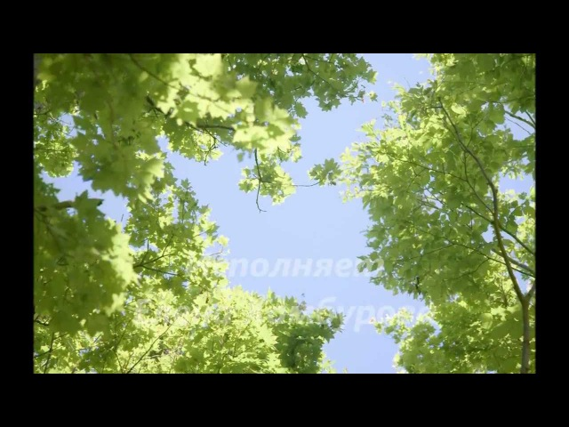 Любовь и разлука - Елена Камбурова