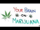 Как ведет себя мозг под марихуаной