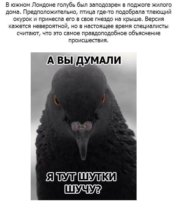 https://pp.vk.me/c622622/v622622983/16a81/U3aI_fLB7Ak.jpg