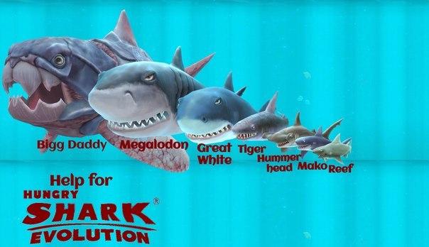 фото большой папочка акула фото