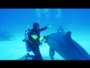 open water diving with trained dolphins