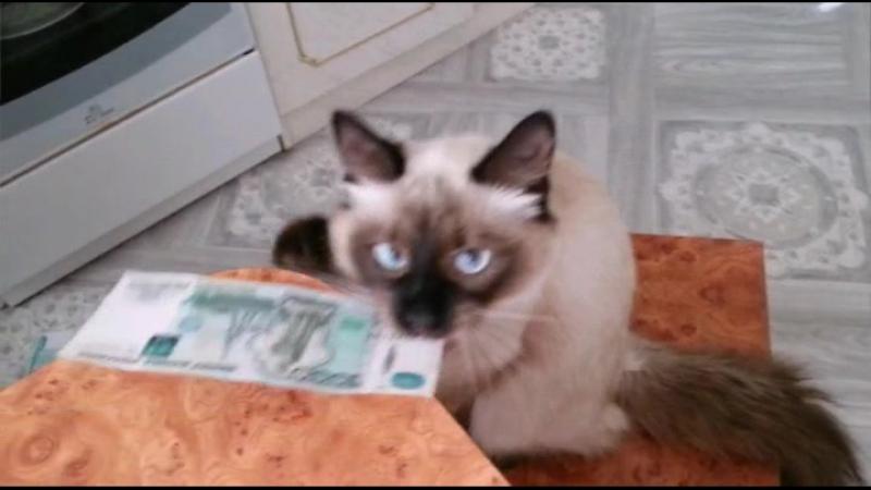 Наш Брюлик тоже почувствовал вкус денег