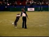 Фристайл-танцы с собакой.