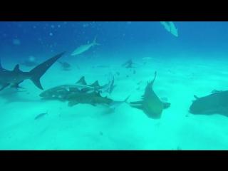 GoPro: Рыба-молот