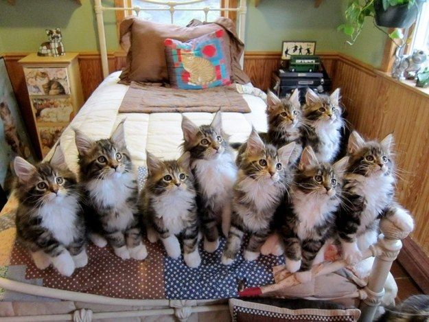 Почему кошки трутся о ноги