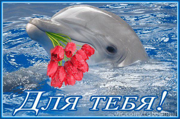Надписью, открытки с дельфинами и с пожеланиями