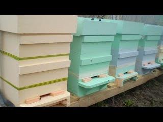 Как сделать пчелиный улей своими руками. Технология изготовления улья для пчел