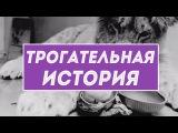Трогательная история льва Кристиана – спасение и новая жизнь в дикой природе