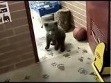 Друзья - медвежонок и волченок в одной квартире
