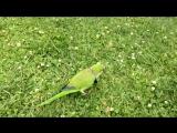 Barcelona VLOG: Попугаи в Парке Цитадели