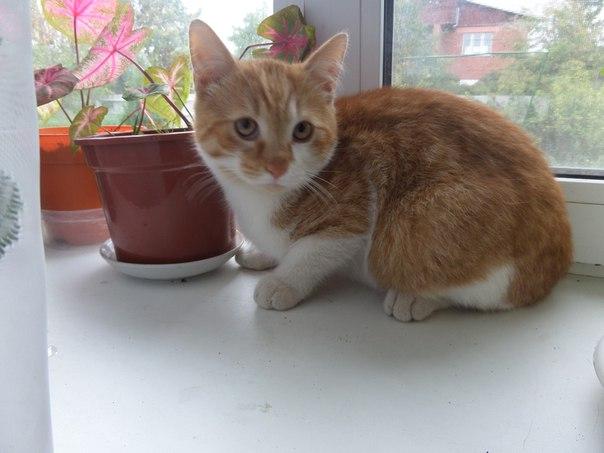отдам котят в хорошие руки. рыжий котик и две кошечки. возраст 4 месяц