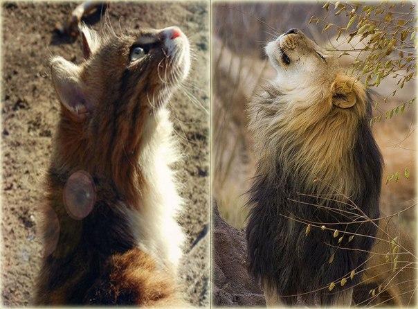 В начале сотворения мира Солнце создало льва, а Луна - кошку.
