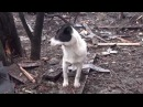 Последний пес села Никишино