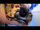 Черепахе из Турции распечатали новый клюв на 3D-принтере