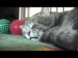 Sleeping cat quacks when his owner coughs