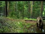 National Geographic  Сибирь. Суровая природа России. Документальный фильм СИБИРЬ.