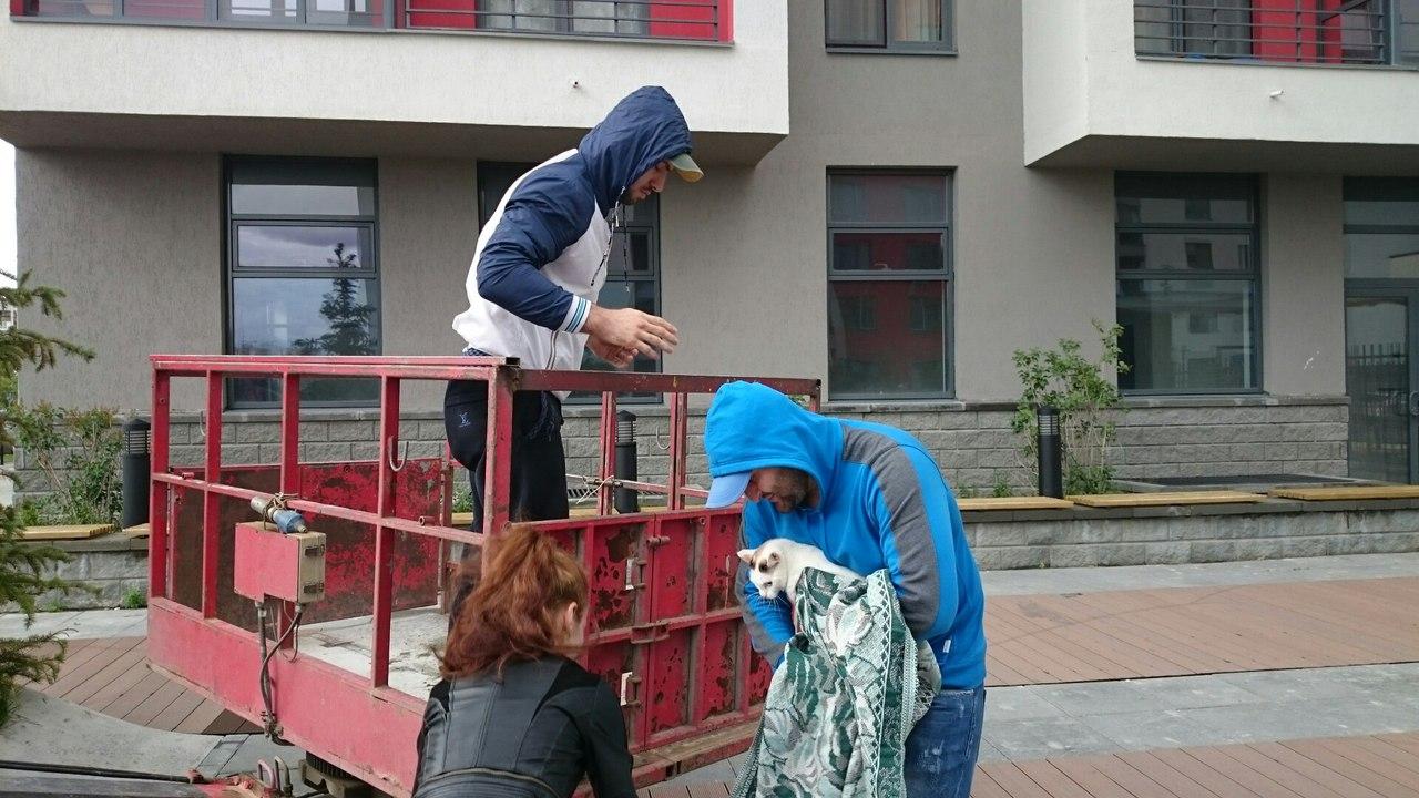 Три дня в заточении на балконе: белую кошку спасли 4