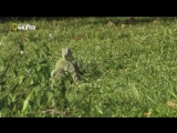 Anaconda_Silent_Killer_HDTVRip_720p