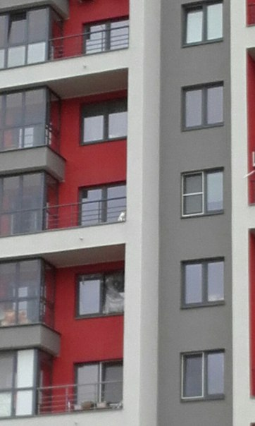 Три дня в заточении на балконе: белую кошку спасли 2