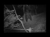 Чем занимаются медведи, пока никто не видит