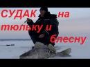 Ловля судака зимой на тюльку и блесну Куйбышевское водохранилище