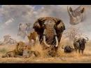 Загадочный мир диких  животных. Документальный фильм 2015 в хорошем качестве HD