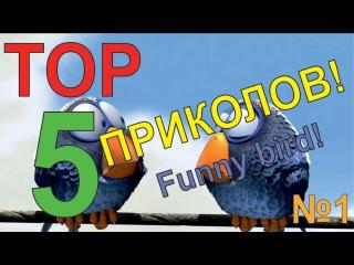 ТОП 5 | ПРИКОЛЫ С ПТИЦАМИ! ВЫПУСК №1!