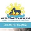 Коты и кошки ищут дом! (Санкт-Петербург)