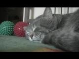 Когда я кашляю, мой кот крякает