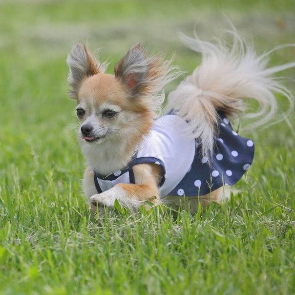 OSSO Fashion - лучшие товары для животных,дрессировки,спорта - Страница 2 O8XEcYePRwg