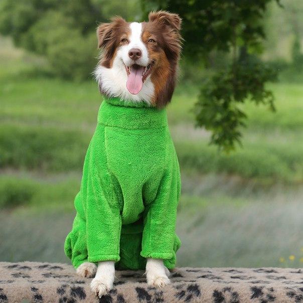 OSSO Fashion - лучшие товары для животных,дрессировки,спорта - Страница 2 IqTYaIuCySU
