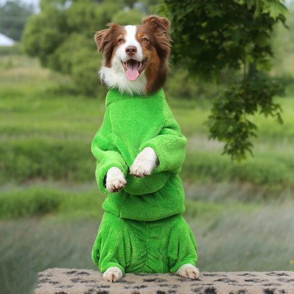 OSSO Fashion - лучшие товары для животных,дрессировки,спорта - Страница 2 JByyTG8OtNM
