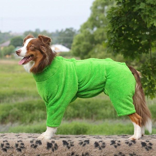 Одежда для дрессировки собак