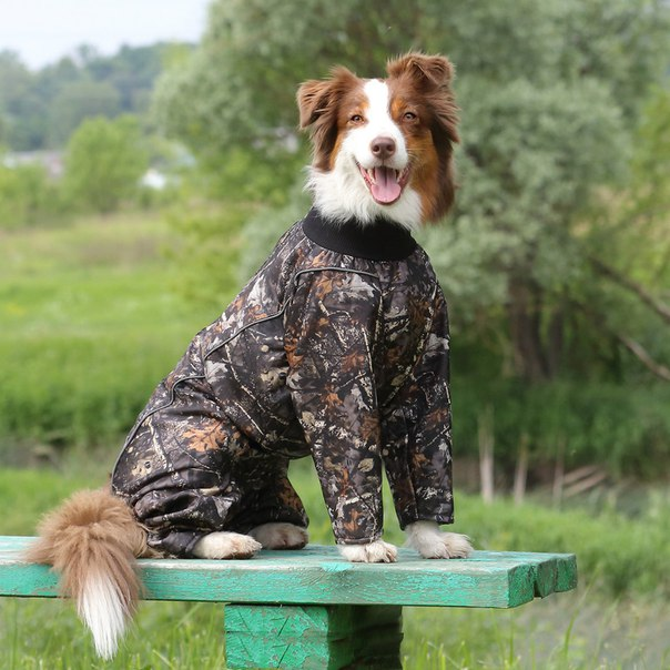 OSSO Fashion - лучшие товары для животных,дрессировки,спорта - Страница 2 HGuaMDljCug