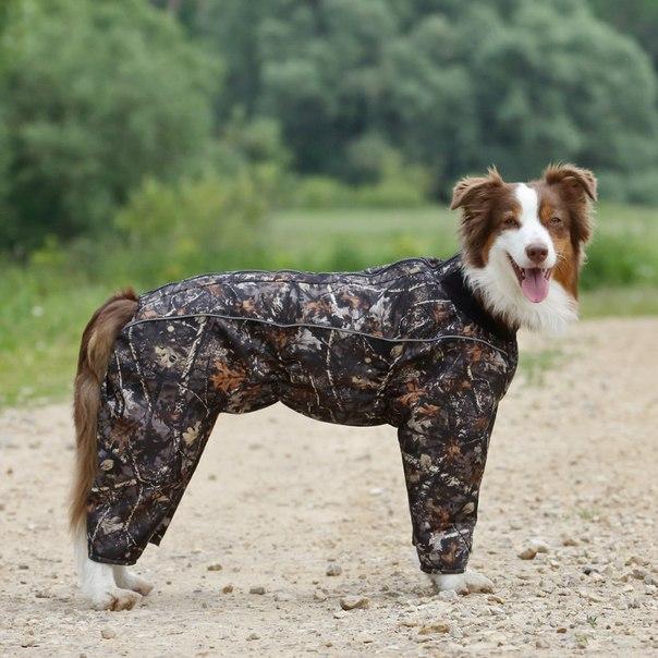 OSSO Fashion - лучшие товары для животных,дрессировки,спорта - Страница 2 1GYHsiJEBwo