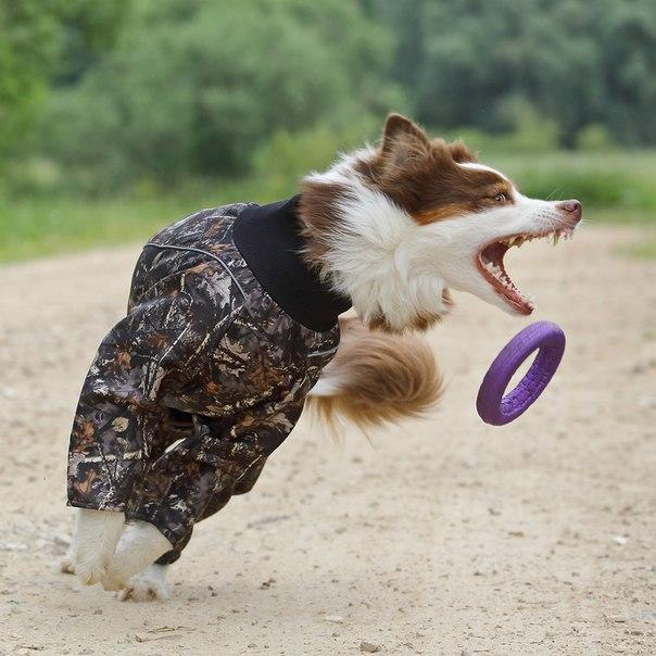 OSSO Fashion - лучшие товары для животных,дрессировки,спорта - Страница 2 SBPNv_ZKqJY