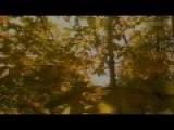Вера Красовицкая Осенние листья