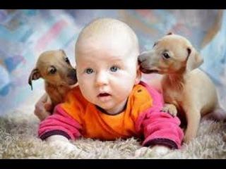 Кошки, собаки и дети 2 ● Приколы с животными осень 2014 ● Funny animals ● Dogs, Cats & Cute Kids ● C