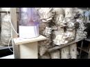 помещение для выгонки грибов Вешенка, идеи для бизнеса