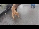 собачьи бой видео 2015 Guf