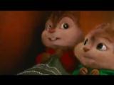 Кавказские бурундуки часть 2) Caucasian Chipmunks 2) - YouTube_0_1420306914393