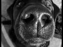 Песни нашего века Песенка о собачке Тябе