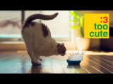 Funny Cats and Dogs compilation. Cat fails 2015.