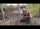 Осенняя обрезка кустов винограда Нарезка лозы винограда для выращивания саженцев