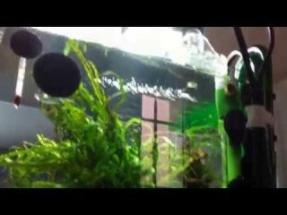 Aquarium Nano Cube Dennerle 30L Aquascape