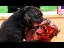 Собаковладелица подала в суд на семью, собаку которой загрызли её питбули