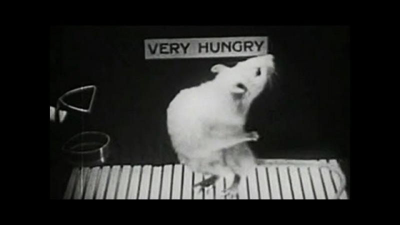 Hungry Rat: