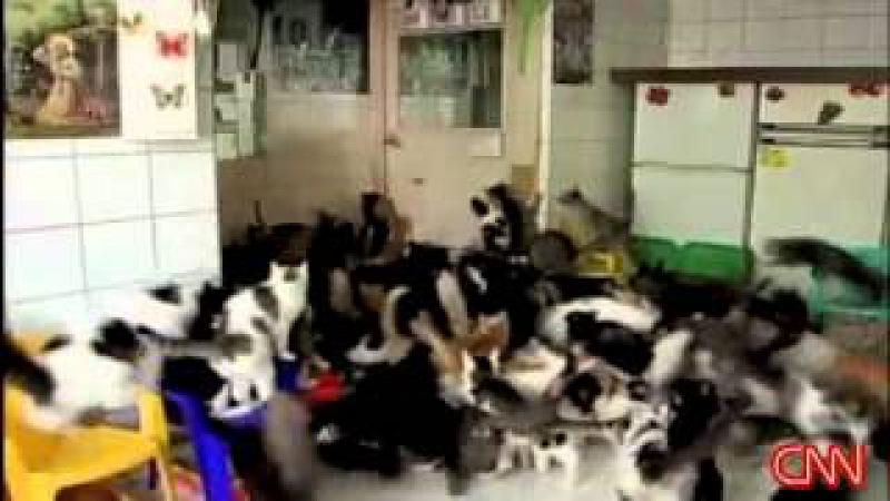 Больная на голову бабка и ее 130 кошек...